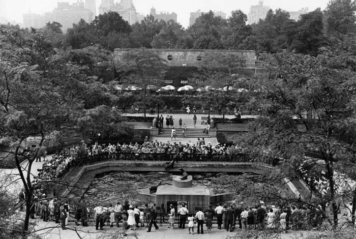 Зоопарк в Централ парке