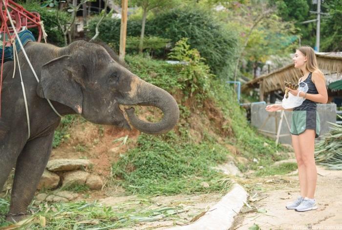 Кормление слонов в зоопарке Пхукета