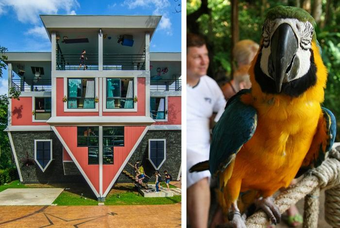 Перевернутый дом (Baan Teelanka — Upside Down House) и парк Птиц (Phuket Bird Park)
