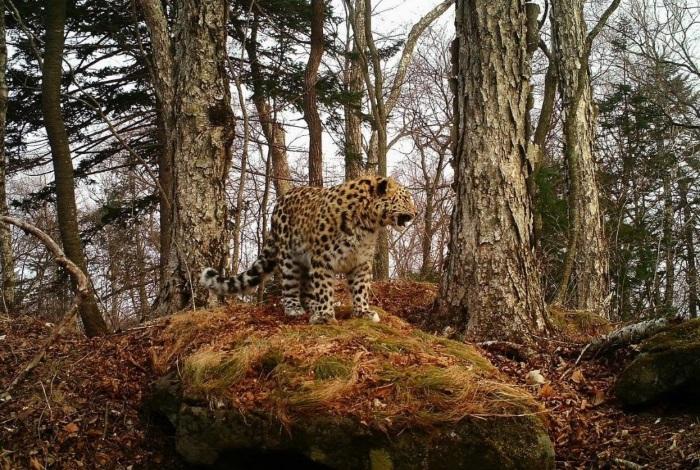 Леопардовый заказник