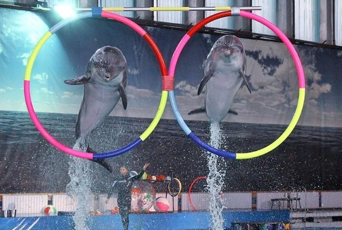 Шоу дельфинов в дельфинарии СПБ
