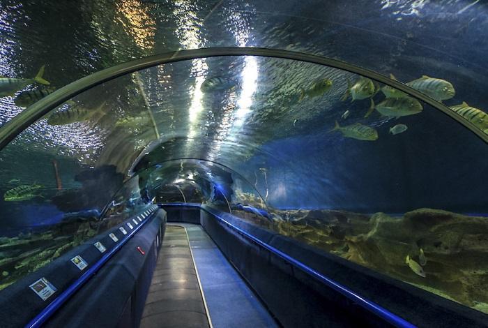 Океанариум Планета Нептуна Санкт-Петербург