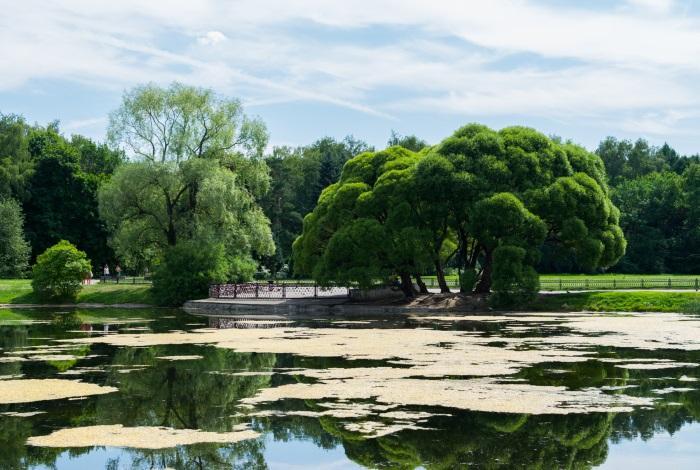 Главный ботанический сад имени Цицина