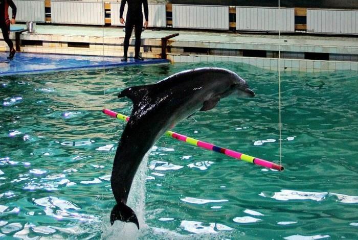 Тренировка дельфина в дельфинарии