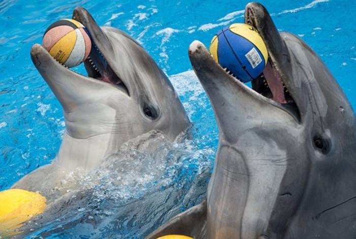Один из номеров в дельфинарии