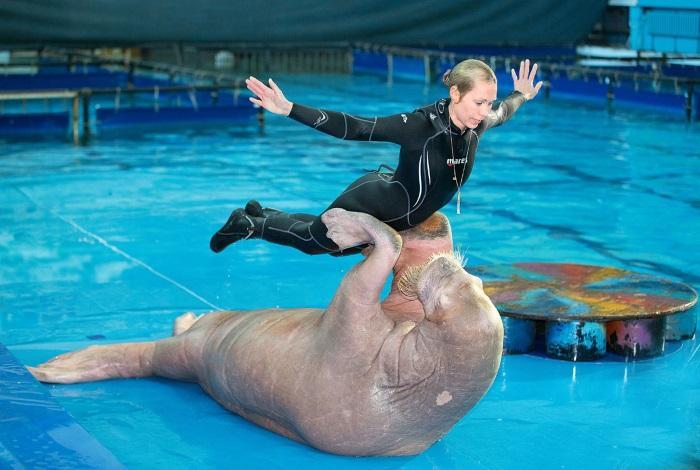 Шоу-программа в дельфинарии СПБ