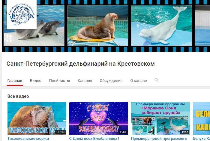 Канал на YouTube Санкт-Петербургского дельфинария