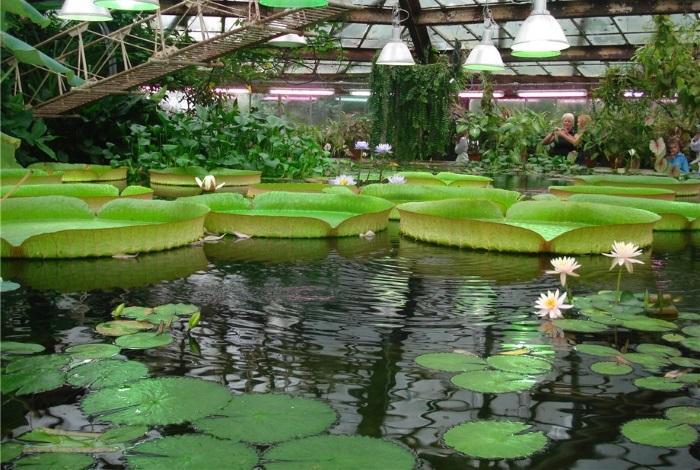 Ботанический сад Петра великого Санкт-Петербург