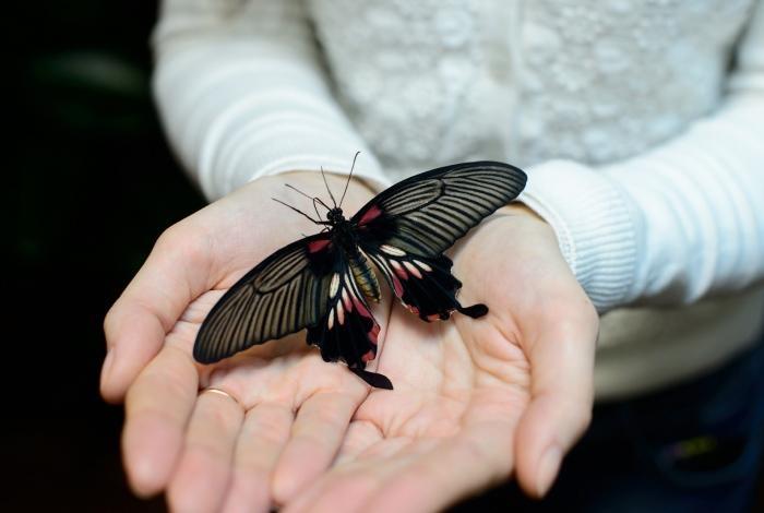 Музей тропических бабочек Санкт-Петербург
