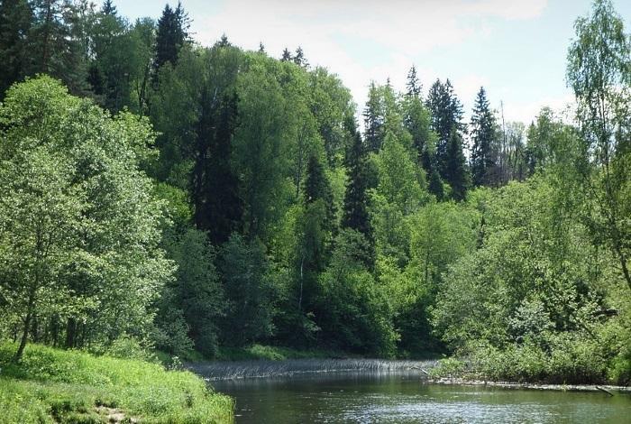Дубровицкий лес