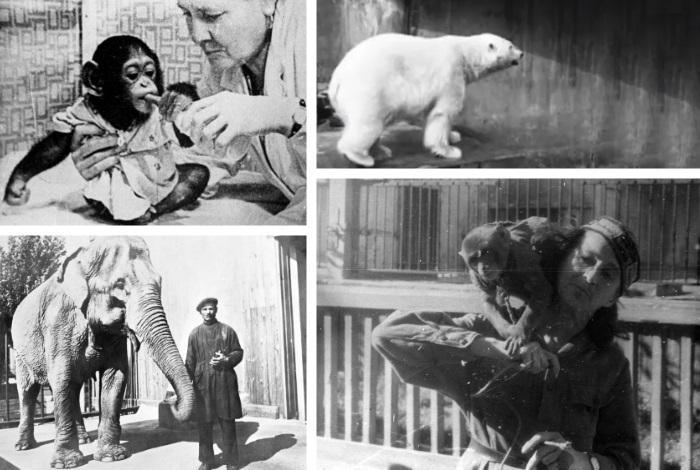 Уход за животными зоопарка