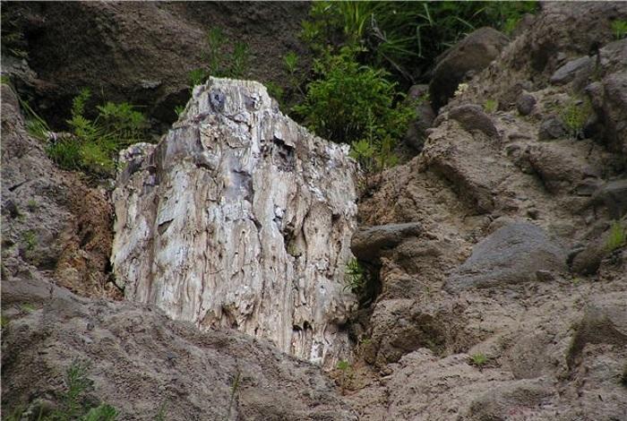 Сизиманский каменный лес