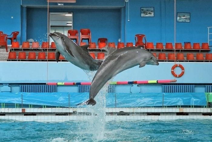 Дельфинарий Санкт-Петербург