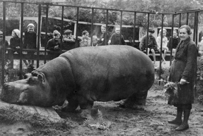Архивное фото Ленинградского зоопарка