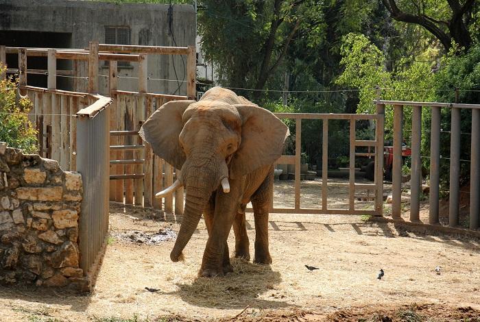 Сафари-зоопарк Рамат-Ган