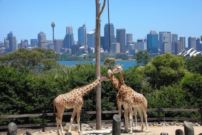 Зоопарк «Таронга»