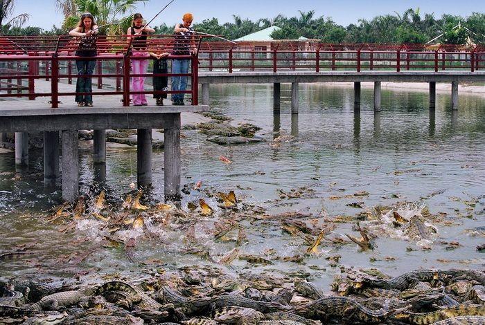 Крокодиловый парк Гуанчжоу