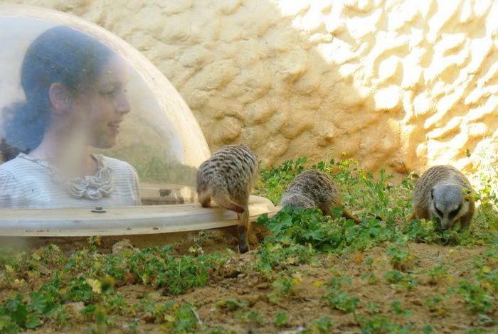 Иерусалимский библейский зоопарк