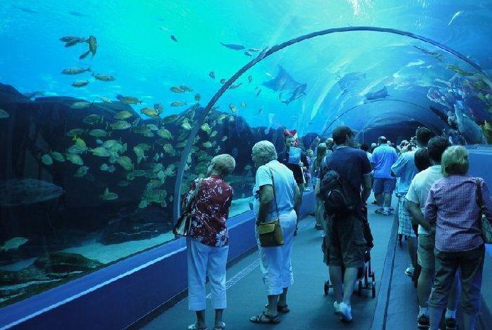 Океанариум Aqua Rio