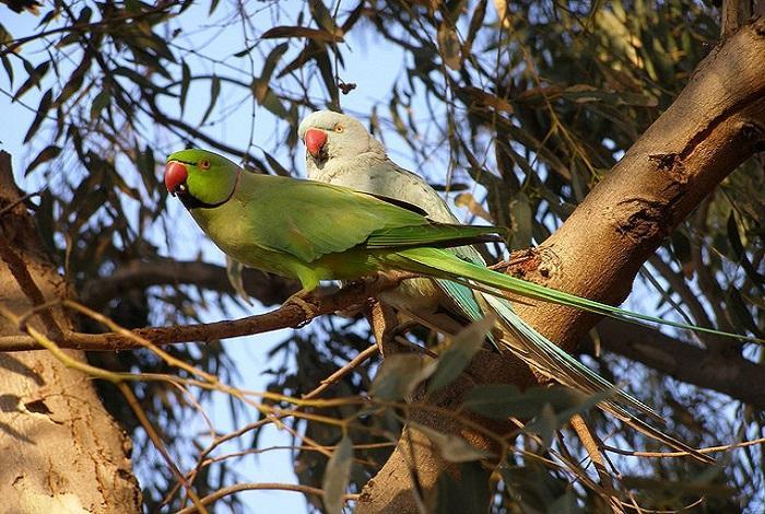 Парк птиц Цапари