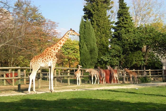 Зоопарк в Венсенском лесу