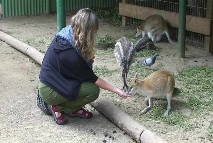 Зоопарк Featherdale Wildlife