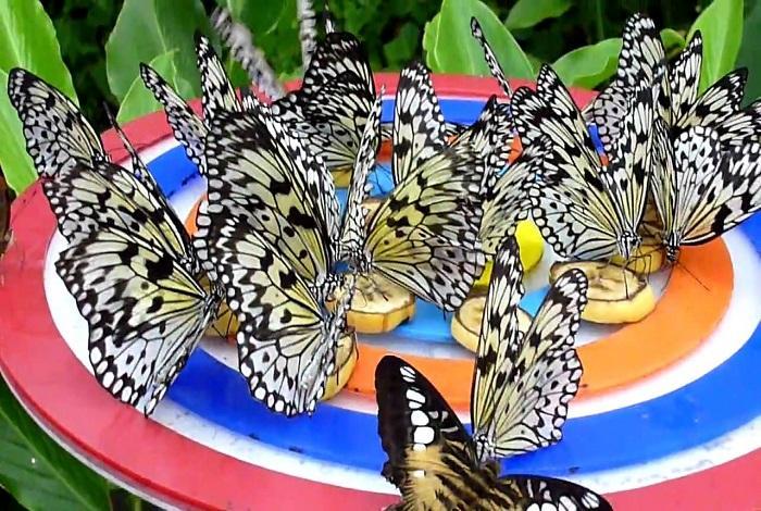Парк бабочек на Сентосе